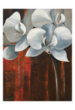 Pearl Orchid I Withaar