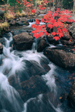 Autumn at Jordan Stream  Mount Desert Island  Acadia  Maine