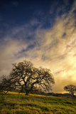 Warm Morning Light and Oak Trees  Mount Diablo  San Francisco Bay Area