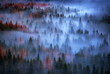 Mesmer - Moody Fog and Trees  Yosemite Valley  National Parks