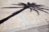 Palm Tree Shadow in Cadiz