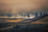 Bison Mist Landscape  Yellowstone National Park  Wyoming
