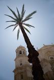 Palm Tree in Cadiz