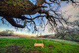 Diablo Swing and Winter Hills  Mount Diablo  Contra Costa California Oak