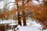 Winter Visions Riverside Merced River  Yosemite Valley