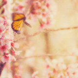 Delicate Butterly and Flowers