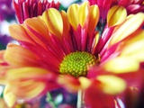 Close Up of Pink Flower Petals
