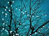 Tree at Night with Lights