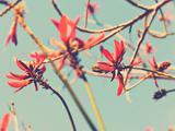 Flowers in Bloom on a Tree