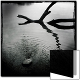 Branch in Water