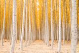 Autumn Tree World  Light Sun and Trees  Eastern Oregon