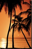 Tropical - Sunset