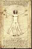 Vitruvian Man  c 1492