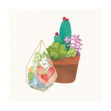 Succulent Garden I