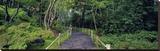 Tea Garden Walkway  San Francisco Botanical Gardens