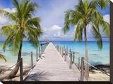 Pier and coconut trees  Fakarava  French Polynesia