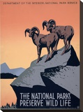 The National Parks Preserve Wild Life  ca 1936-1939