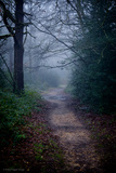 Woodland Scenery in England