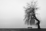 Winter Scene with Lake and Park Bench