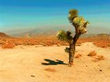 Desert Scene with Cactus Plant