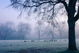 Winter Scene with a Flock of Birds Feeding on the Ground