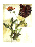 Poet Florals