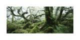Wistman's Wood  Dartmoor
