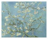Almond Blossoms  1890