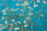 Almond Blossoms  1890