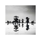 Cypress Swamp V