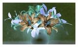 Floral Color 20