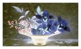 Floral Color 18