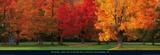 Maple Trees in Autumn  White Mountains  New Hampshire