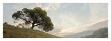 Oak Tree 10 Pano
