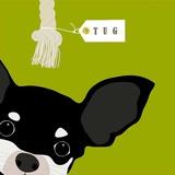 Peek-a-Boo Chihuahua