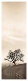 Sentinel Oak Tree