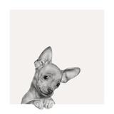 Sweet Chihuahua Reproduction d'art par Jon Bertelli