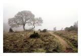 Oak Tree 25