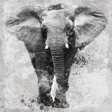 Proud Elephant