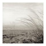 Tuscan Coast Dunes 1