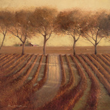 Vintage Sunlit Vineyard