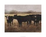 Black Cows I
