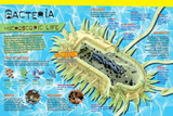 Infographic on Bacteria  the Most Ancient Life Forms on Earth