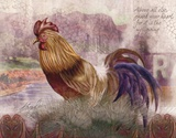 Blue Tail Rooster