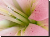 Lily With Raindrops II