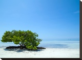 Florida Lonely Tree