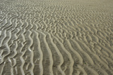 Ripples in sand  inter-tidal sands on coast  North Norfolk  England