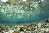View of coral reef habitat in shallows  Potato Point  Fiabacet Island  West Papua