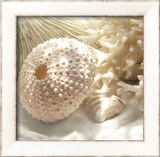 Coral Shell I