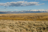 View of sagebrush prairie habitat  with distant mountain range  Walden  Colorado